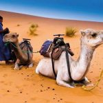 Moroccan-Family-Tour-Excursion-Travel-Marrakech-Casablanca-Fes-Errashidia-43