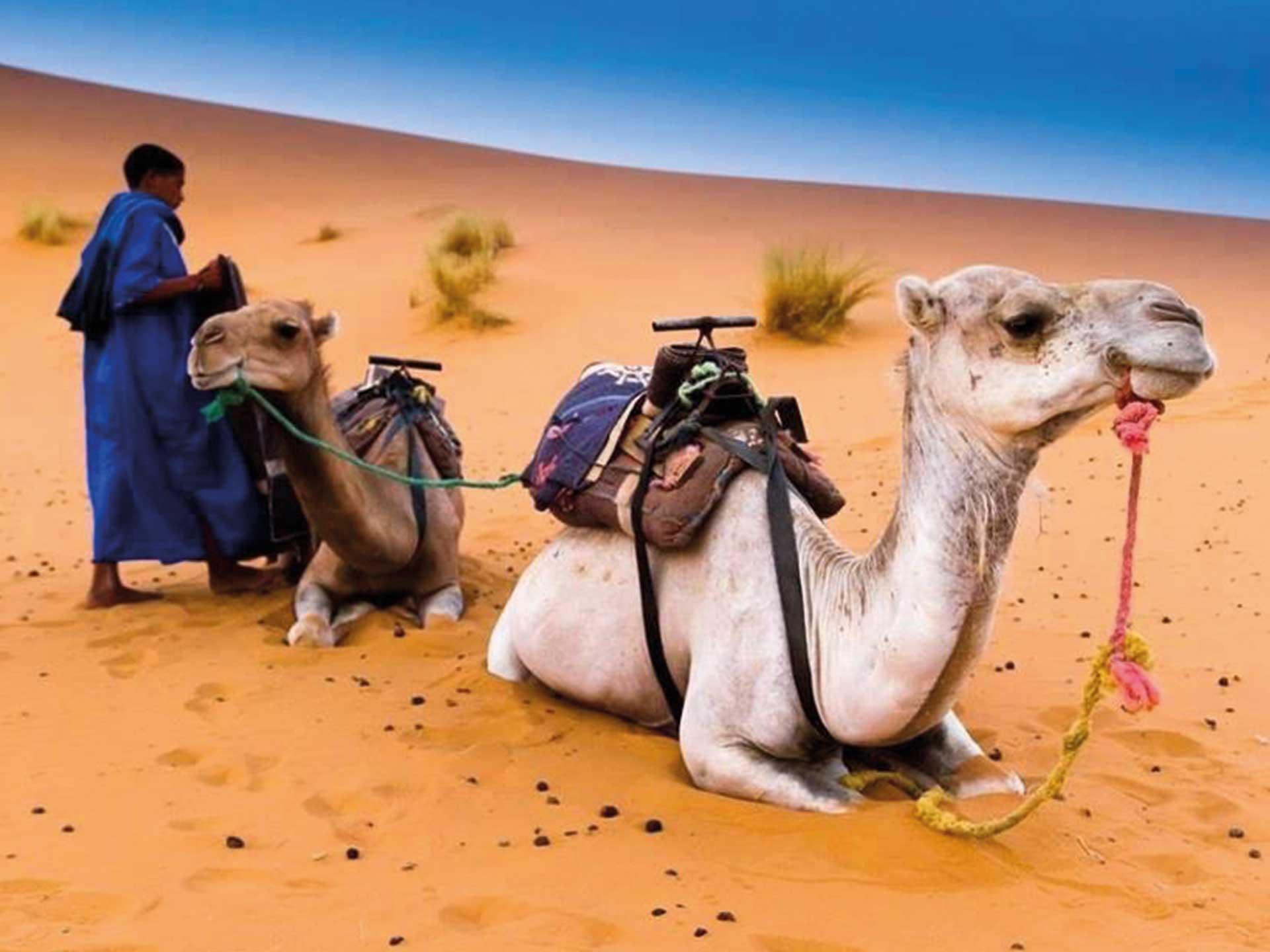 Moroccan-Family-Tour-Excursion-Travel-Marrakech-Casablanca-Fes-Errashidia-43